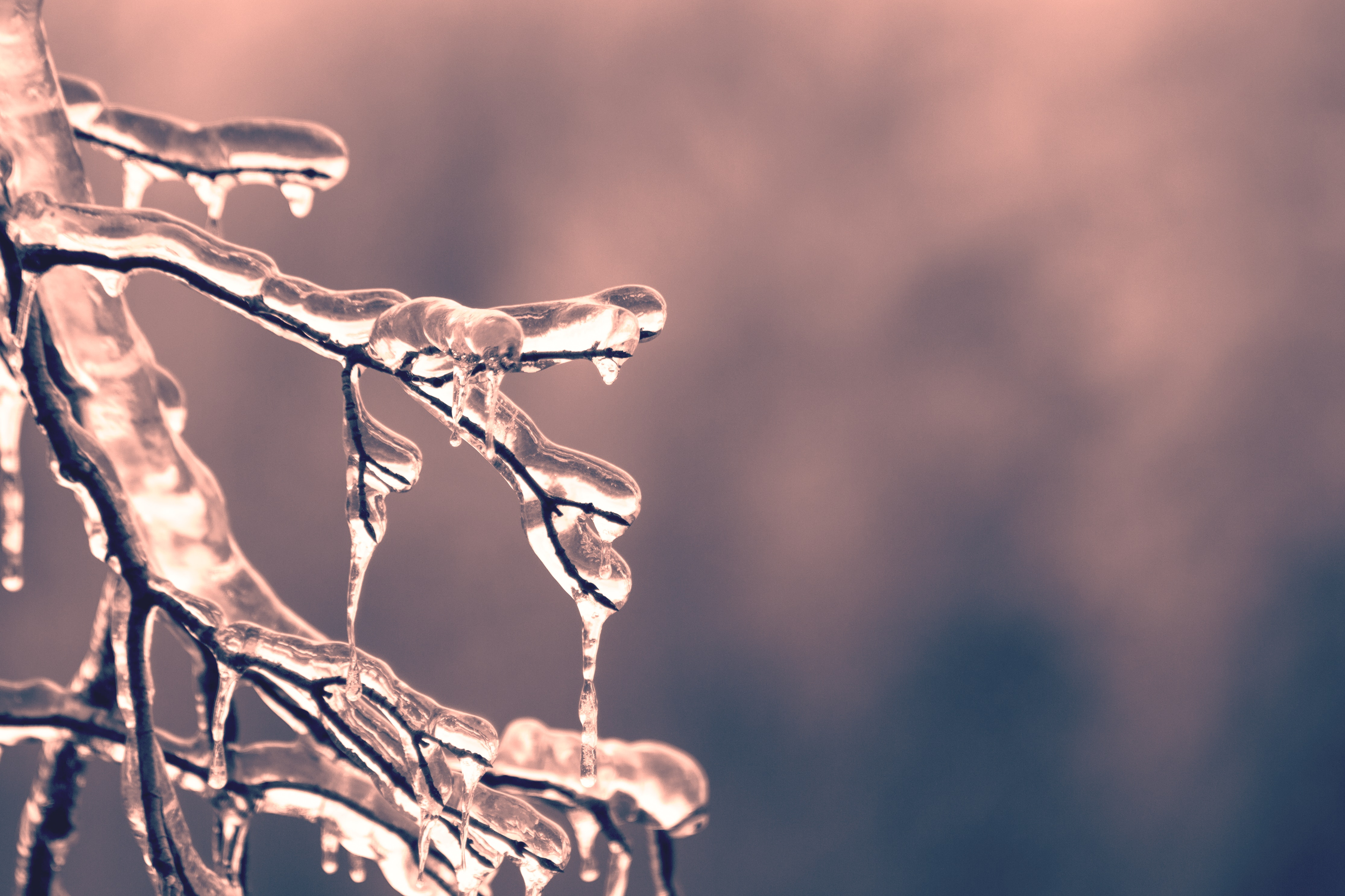 ice frozen on tree branches